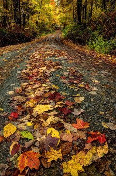 NEW ENGLAND fall leaf covered road